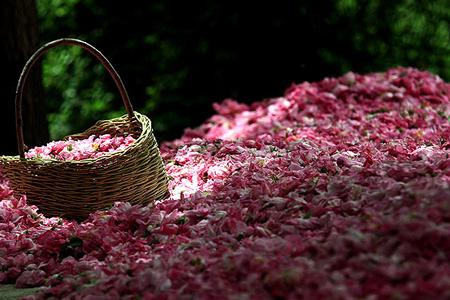 Rose e spezie
