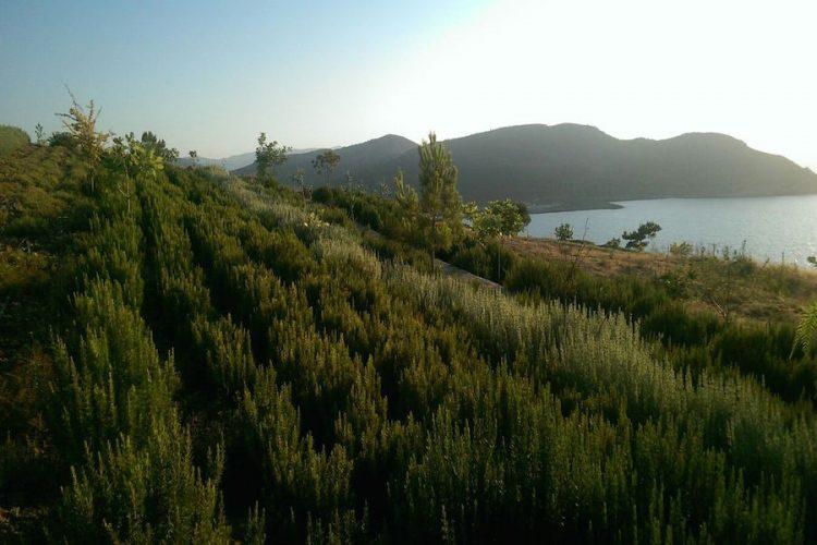 cret herbs