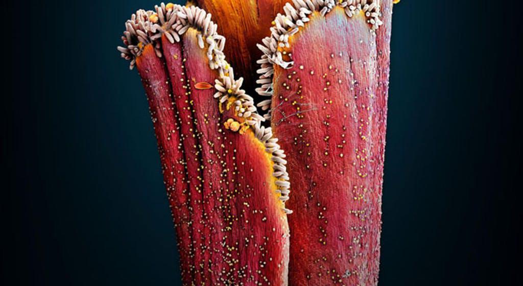 spezie ed erbe al microscopio