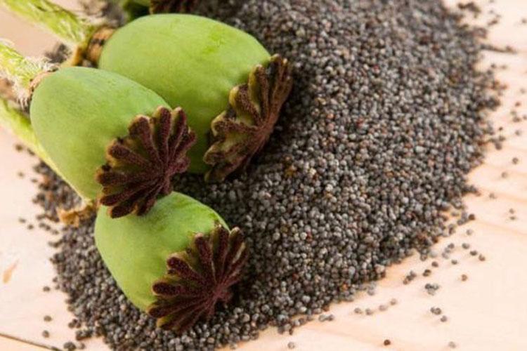 Attenzione ai semi di papavero